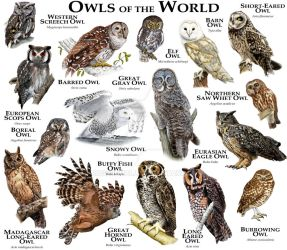 Owls of the World by rogerdhall