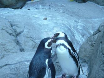 Penguin Kisses by unordinalwhimsey