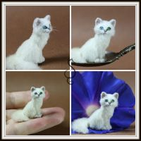 Bi-Color Eye White Cat by Teensyweensybaby