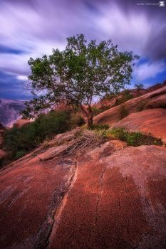the tree by sultan-alghamdi