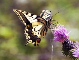 butterfly 2 by aydnahmet