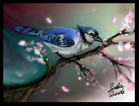 Blue jay by TheMysticWolf
