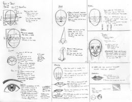 How to draw the Head by jasonfrancisco
