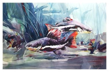 Redtail Catfish - Watercolour Painting by Abstractmusiq