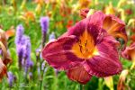 Summer Colors by Spid4