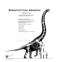 Giraffatitan brancai rigorous skeletal by Paleo-King
