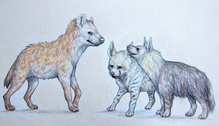 Young Hyenas by Asceline