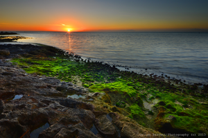 Mossy Morning by Delton36712