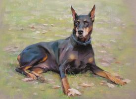 A doberman by yunyi2009