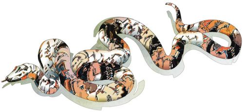 Boa constrictor by HR-FM