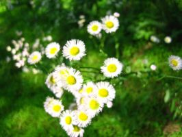 Wild Flowers by Holly6669666