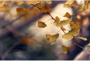 Time of Autumn by ChiFeng-dA