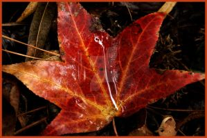 Fall Leaf 1 by explicitly