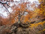 Oak tree in fall colors - Eiche im Herbst by zeitspuren