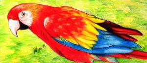 Parrot (Colored Pencils) by ihsans-Art