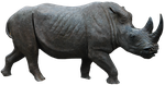 Rhino 02 By Gd08 by gd08
