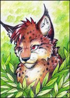ACEO - Kirsch by jrtracey