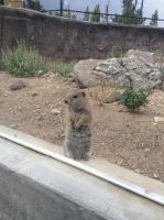 Cross Country Trip 2015: Gopher by Valrayne