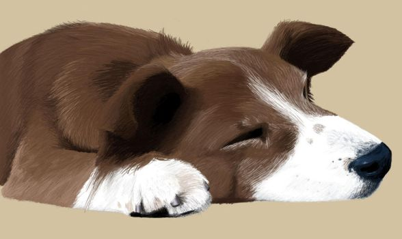Sleeping Dog by Xilmin
