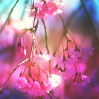 Spring Dream by incolor16