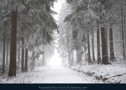 Winter Forest with Fog 07 by kuschelirmel-stock