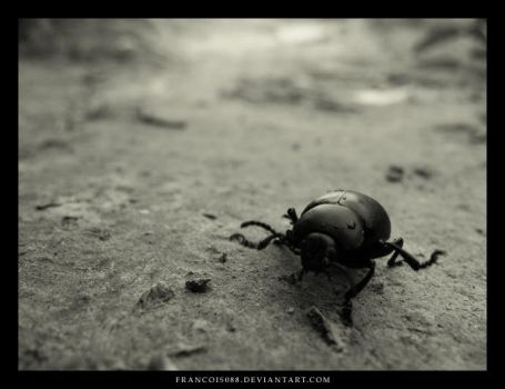Scarab by Francois088