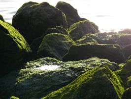 Mossy rocks at the water 2 by StockSaphitri