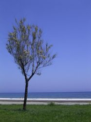 Arinella - Flat Scribbles Tree by michelv