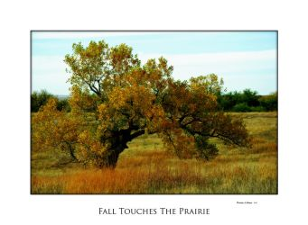 Fall Touches The Prairie by Pennes-from-Heaven