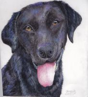 Sketchbook assignment-dog by BreannaE