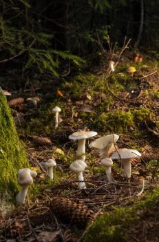 Fungi ring by PaVet-Photography