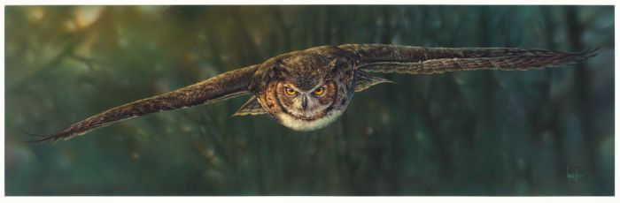 Aerial Intensity -  Great Horned Owl by denismayerjr