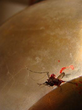 dead mosquito by magv89