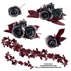 PNG Stock Black Roses by E-DinaPhotoArt