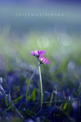 October Daisy by Justine1985