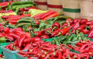 Variety of Hot Peppers by Kitteh-Pawz