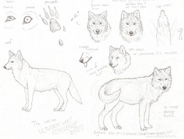Wolf Reference Sheet sketch by Ydera