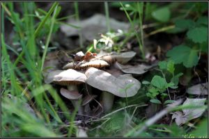 Spring Encounter: Entoloma clypeatum by Clu-art
