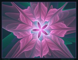 Frosted Pink Star by zsteve