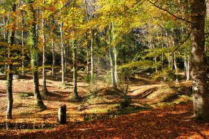 Autumnal colours in Geres by vmribeiro