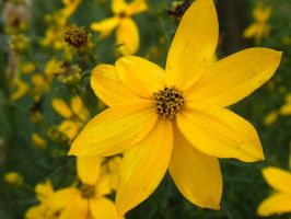 Mellow and Yellow by maerocks