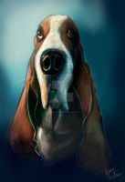 Commission Basset Hound Head Shot Coloured Sketch by Mad--Munchkin
