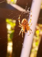 Spider by Photoaddicted1960