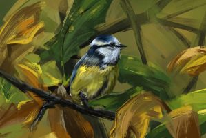 39/365 - Eurasian blue tit by h1fey