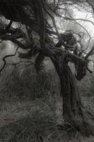 Gnarled tree by f56r78