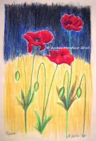 Oil poppies by flysch