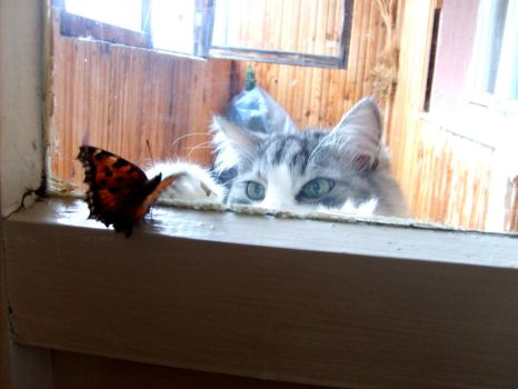 The Cat and The Butterfly by wirtin