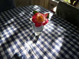 Rose on checkered tablecloth with sunlight by caspercrafts