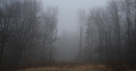 Fog and Woods Stock 2 by TSWright