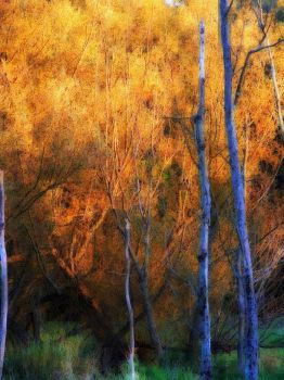 Shades of Autumn by MadGardens